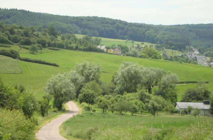Meadows landscape