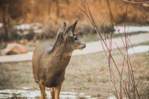 Autumnal scene with deer